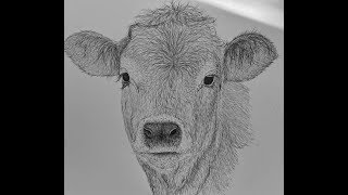 cow step draw easy