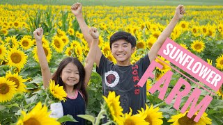Sunflower Farm - Edwards Farm Sunflower