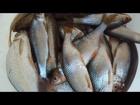 Рыбалка по первому льду Ноябрь 2017. Зимняя рыбалка 2017-2018. Ловля плотвы. Рыбалка в Устюге 🌏