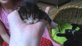 200 видео на канале! УРРРА // МУРЗИК ПРИНЕС КОТЯТ! 3 котенка!!