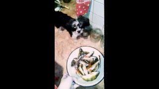 Как я уговаривала собаку съесть рыбу