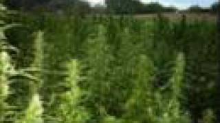 Tenacious D - Marijuanaville