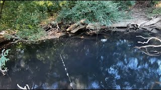 Can I catch Murray cod in this black water?