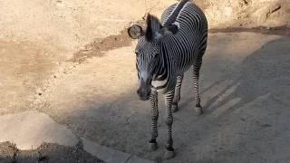 理科とか苦手で「千葉市動物公園 2016.10 ハシビロコウ」 http://rikati...