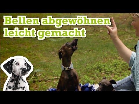 Hund bellt wenn leute vorbeigehen