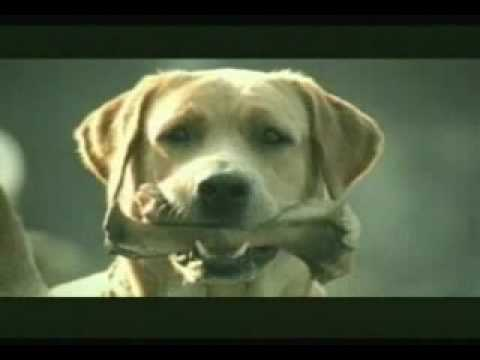 Thumbnail: Banned Commercial - Funny Dog Suicide
