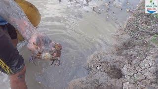 Đi xem mò hang cua đồng mùa khô | Crab