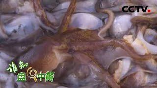 《谁知盘中餐》 20200417 生死时速八爪鱼|CCTV农业