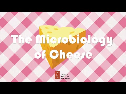 The Microbiology of Cheese