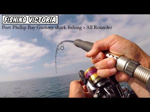 Port Phillip Bay Gummy Shark Fishing + All Rounder