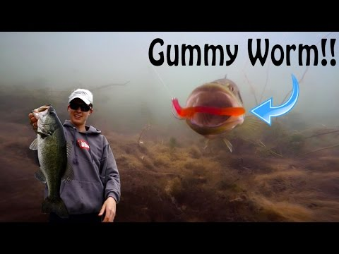 bass fishing with gummy worms underwater gummy bites