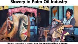 Orangutan used as a Sexual Slavery in Palm Oil Industry