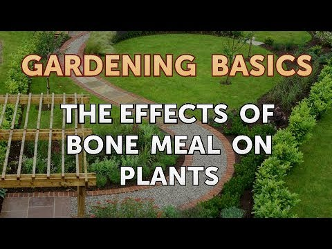 The Effects Of Bone Meal On Plants