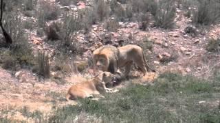 South African Safari - Aquila Game Reserve