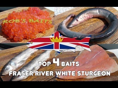 How To Fish Tutorial - Sturgeon Fishing Top 4 Baits