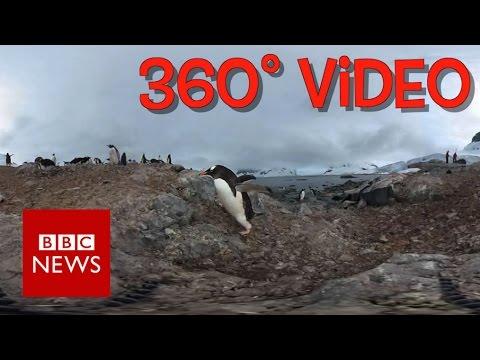 Antarctic Penguins  (360 video) - BBC News
