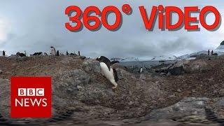 Antarctic Penguins  (360 video) - BBC News thumbnail