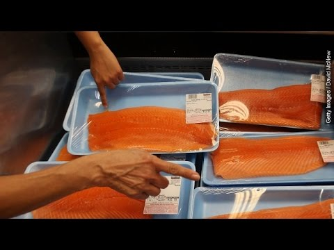 Some Say The First GMO Animal You Can Eat Is Fishy – Newsy