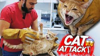 YENİ KEDİ SALDIRISI! Diş, Tırnak & Pençe Yedik! ( cat attack ) #TheVet