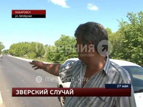 Медведь попал под машину на окраине Хабаровска. MestoproTV
