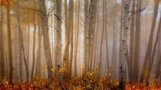 101 Strings Orchestra -  Autumn Leaves - Joseph Kosma, Jacques Prévert.mp3