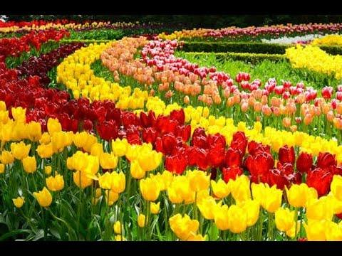 Top 10 Flores Mais Lindas Do Mundo Flores Mais Belas Rosas