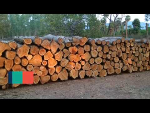 Indian Patta Teak Wood Logs For Sale With Forest Permit
