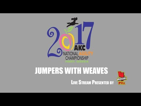 """2017 AKC National Agility Championship: Ring 4 - Jumpers With Weaves (24/26/16"""")"""