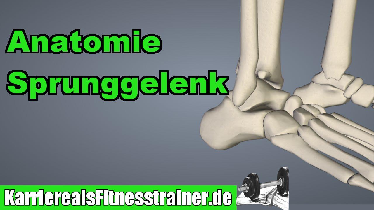 Anatomie des Sprunggelenks für Fitnesstrainer erklärt! - YouTube