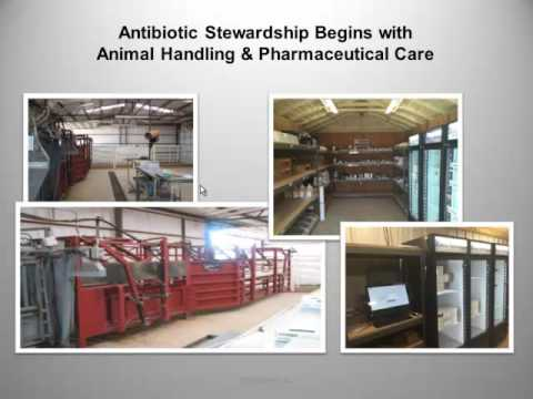 Kevin Hazelwood - Antibiotic Stewardship Updates by Species: Beef