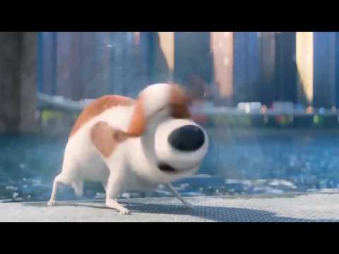 The Secret Life of Pets - Best Scenes