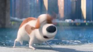 The Secret Life of Pets - Best Scenes Thumb