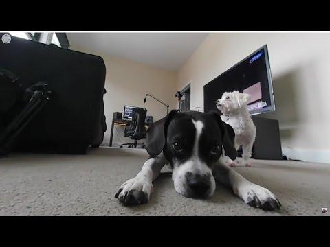 Puppy 360°: Samsung Gear 360 Camera (VR)