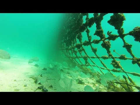What Lies Beneath - Coogee Beach Shark Net.