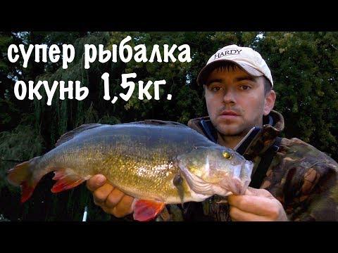СУПЕР РЫБАЛКА  ТРОФЕЙНЫЙ ОКУНЬ 1.5 кг... (твичинг в сентябре)