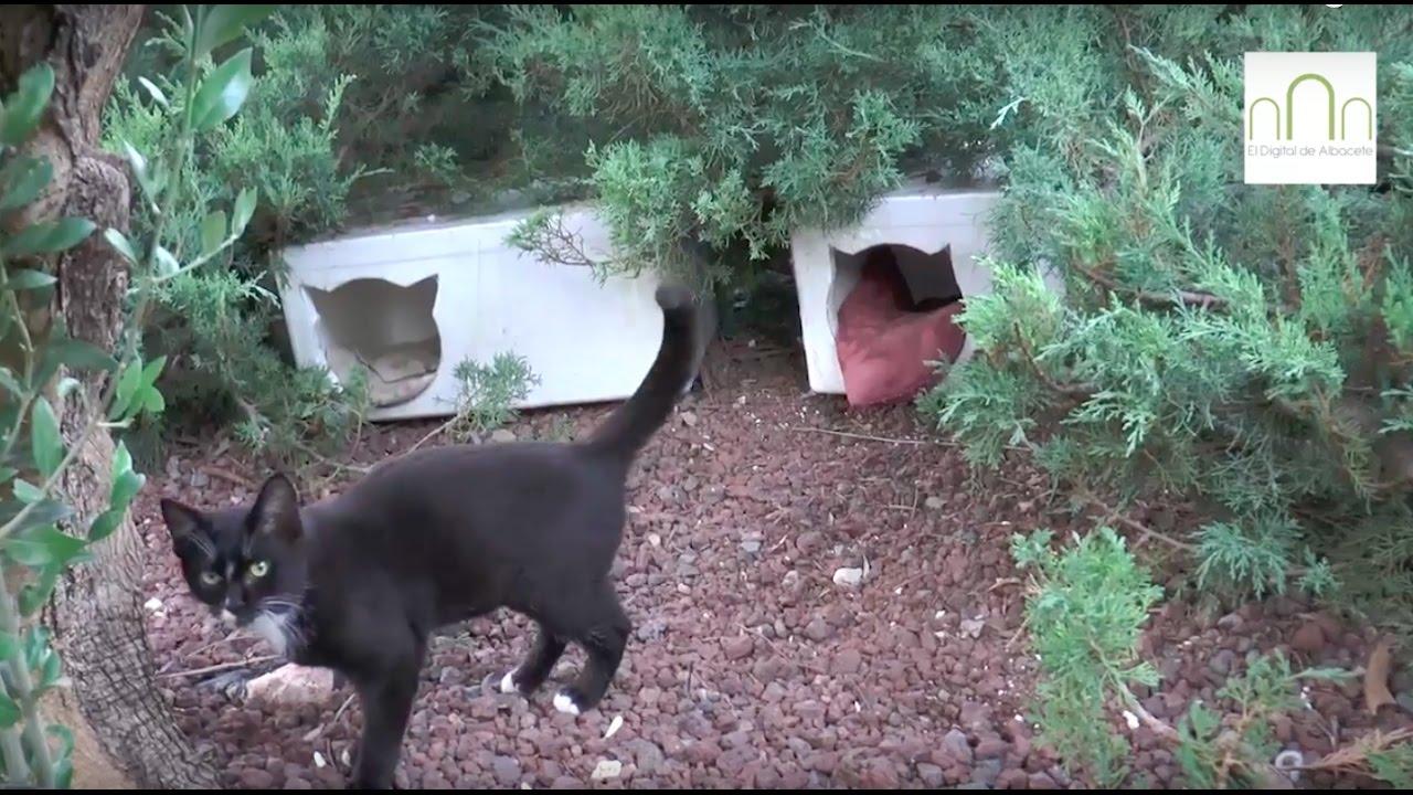 Colonia Controlada De Gatos En El Parque De Los Cuentos De Albacete Youtube