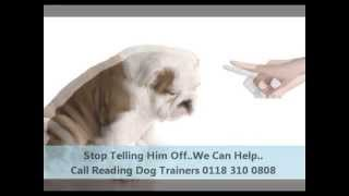 Reading Dog Trainers - Call 0118 310 0808
