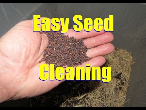 How to Clean Seeds