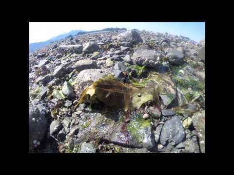 Sitka National Historical Park - Intertidal timelapse 4/30/14