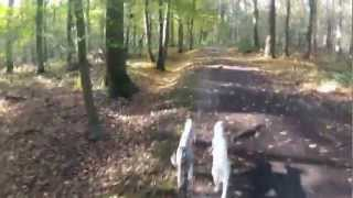 Jogging With The Whippets