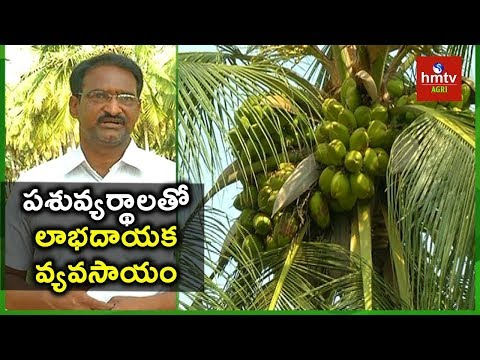 Organic Coconut Cultivation | Farmer Satish Babu Success Story | hmtv Agri