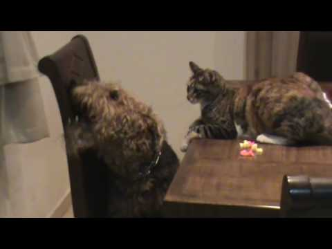 cat-vs-dog-fight-game-(funny)