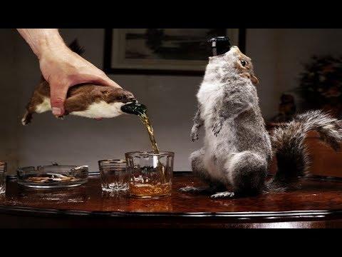 Teuerste Bier Der Welt
