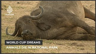 Zimbabwe drought: Hundreds of animals die in National park