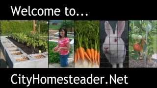 CityHomesteader.Net Introduction