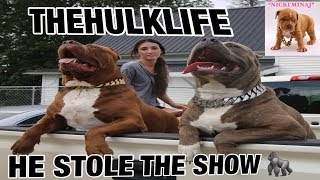 THE HULK LIFE: cant believe im gonna do this! HULK STOLE THE SHOW!!