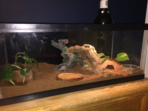 Bio-Active Tank Rebuild // Leopard Gecko