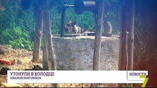 В Одесской области два человека утонули в колодце(В Ивановском районе сразу два человека утонули в колодце. Погибшим было 32 и 27 лет. Трагедия произошла в селе..., 2016-07-28T16:18:20.000Z)