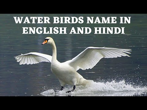 Water Birds Name In English And Hindi Youtube