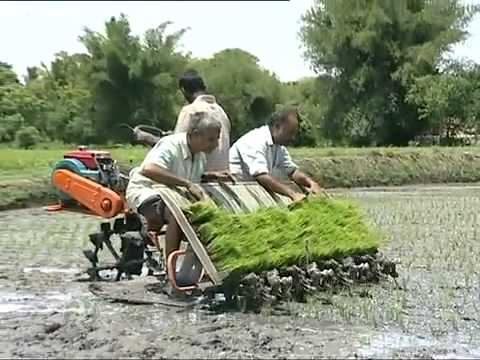 may cay VST   Shakti Yanji Rice Transplanter